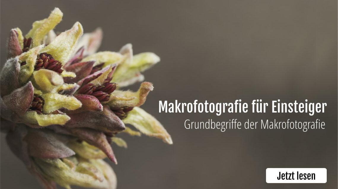 Makrofotografie für Einsteiger und Anfänger